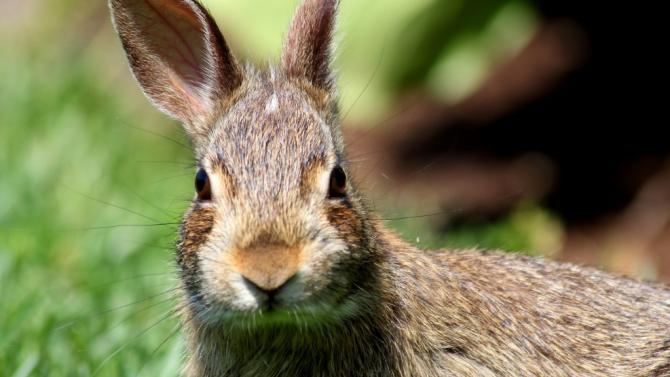 Una familia responsable: hijos, nietos, biznietos y algún conejo